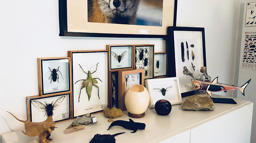 Natural History Curiosities - About Us
