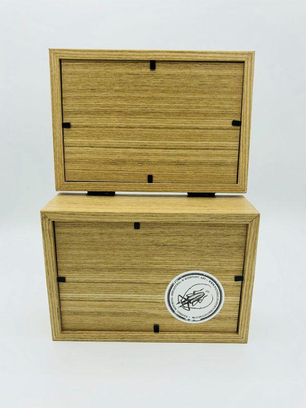 Real insect curious education box (Euchroma Gigantea)