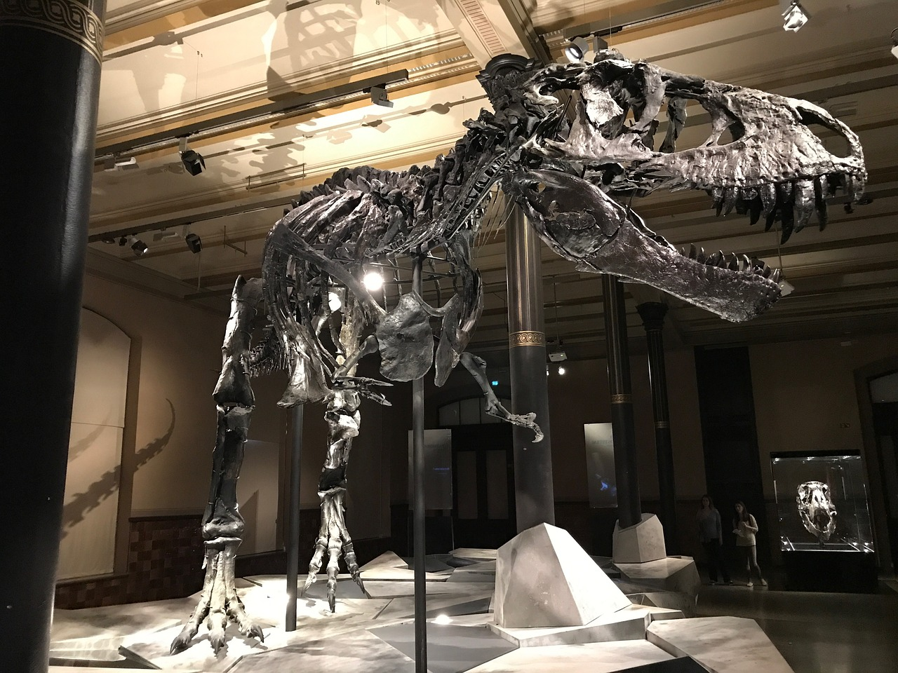 Natural History Curiosities - T-rex skeleton