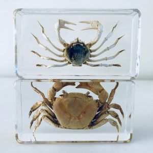 Resin block crabs