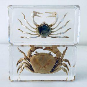 Resin block crabs