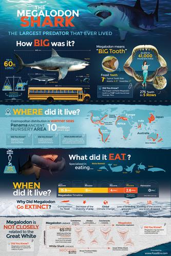 Infographic Megalodon