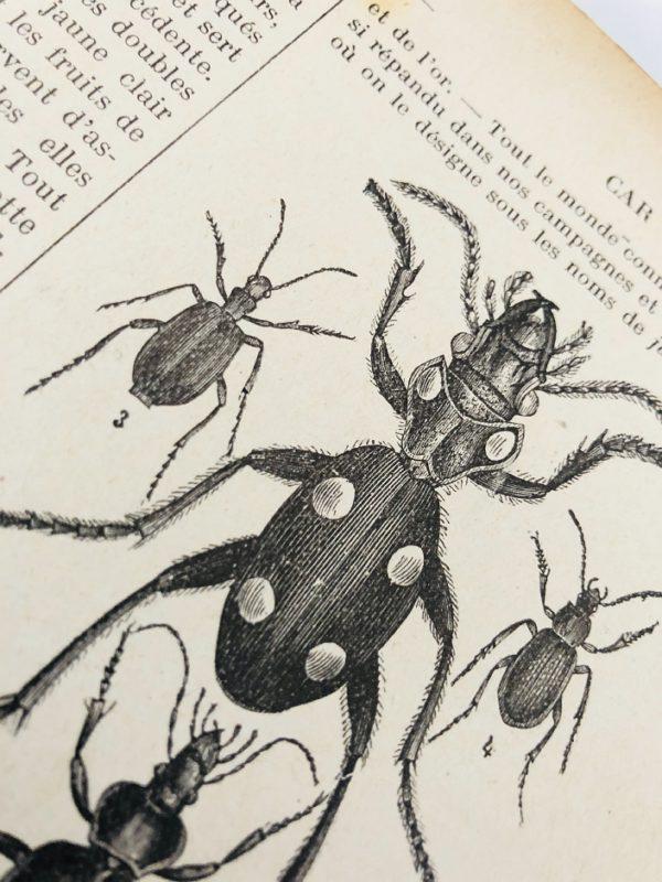 J. Pizzetta - Dictionnaire illustré d'Histoire Naturelle - 1890