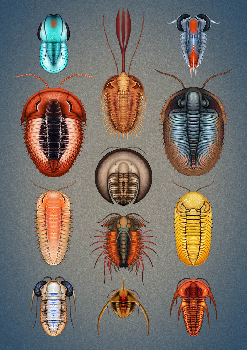 trilobites Franz Anthony