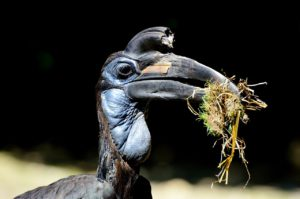 The world of hornbills
