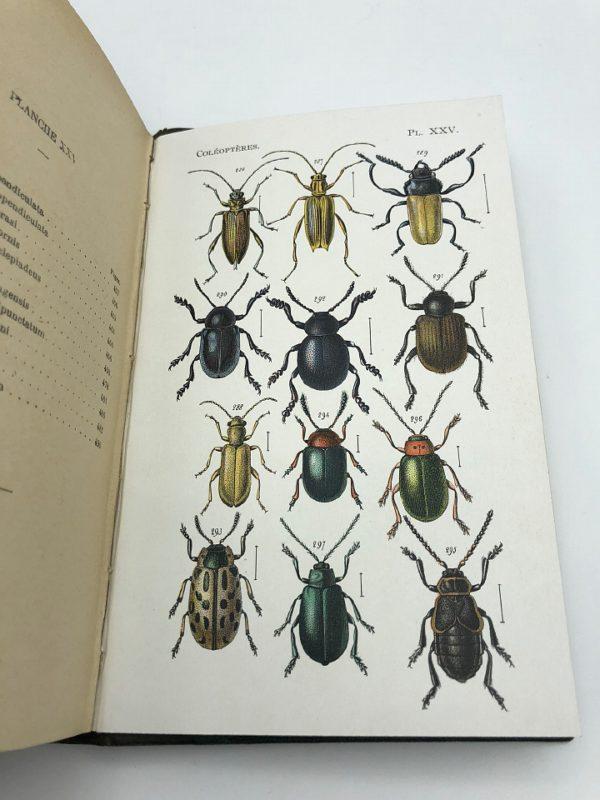 Léon Fairmaire - Les Coléoptères. Histoire naturelle de la France - 1923