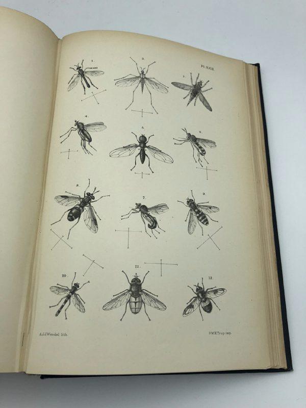 Dr. J.Th. Oudemans - Nederlandsche insecten - 1900