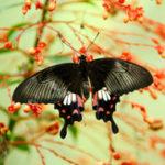 Merlin Butterfly Sanctuary