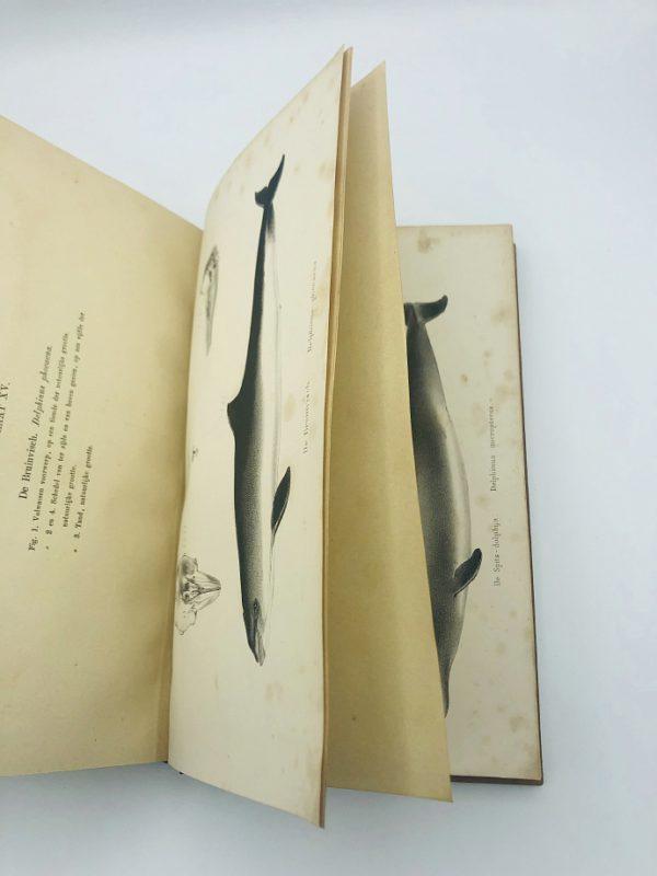 Schlegel, H. - De Dieren van Nederland (1862)