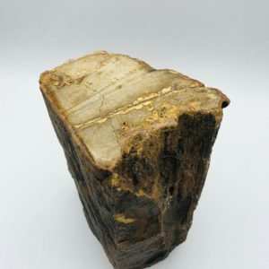 Petrified wood (5) from Indonesia (22 million year old)