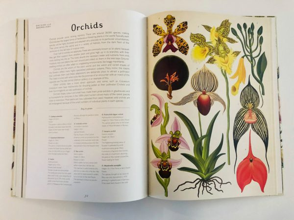 Welcome to the Museum: Botanicum (collector's edition)