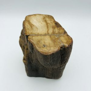 Petrified wood (6) from Indonesia (22 million year old)