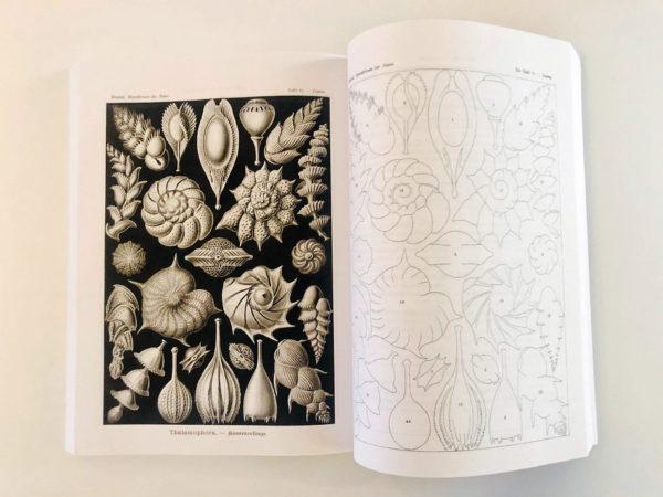 Kunstformen der Nature - reprint 2015 (Ernst Haeckel)