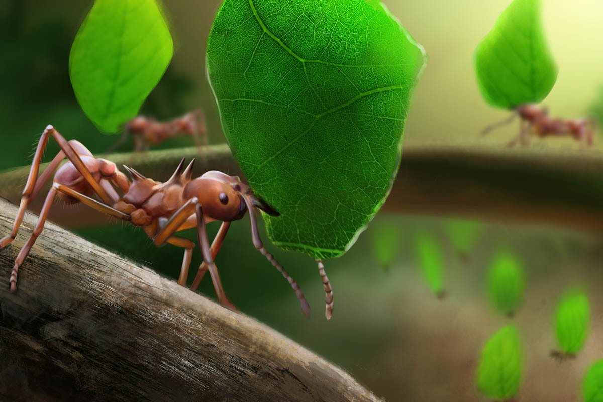 Leafcutter ants, insect famers