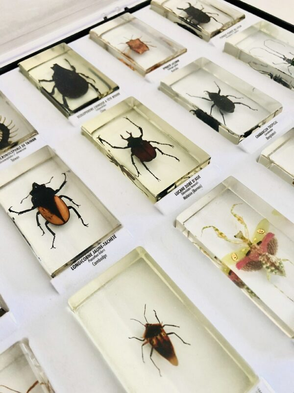 Collection of insects in resin blocks (15)