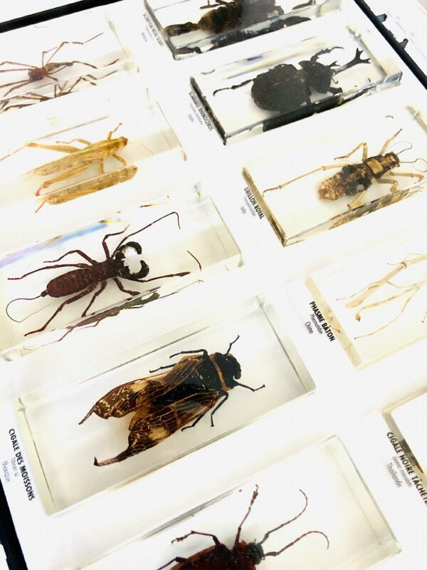 Collection of insects in resin blocks (10)
