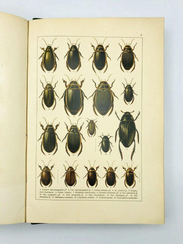 C. Schaufuss - Calwer's Käferbuch - 1916