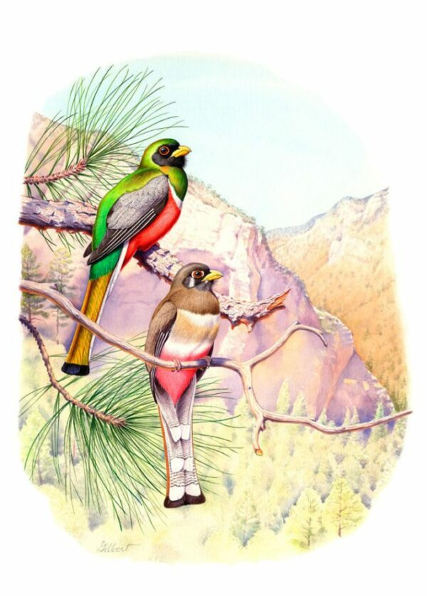 Trogons - A Natural History of the Trogonidae
