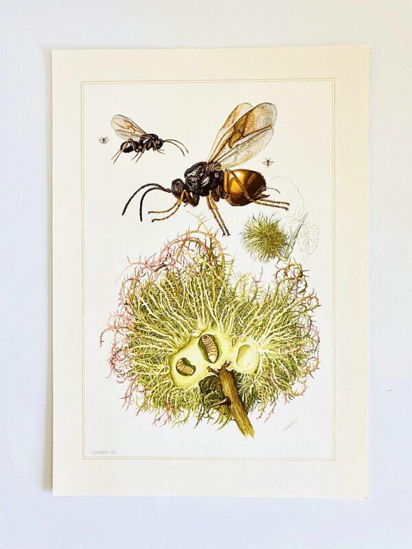 Dr. H. Engel - Mitteleuropäische Insekten. (Spinnentiere und Tausendfüssler)
