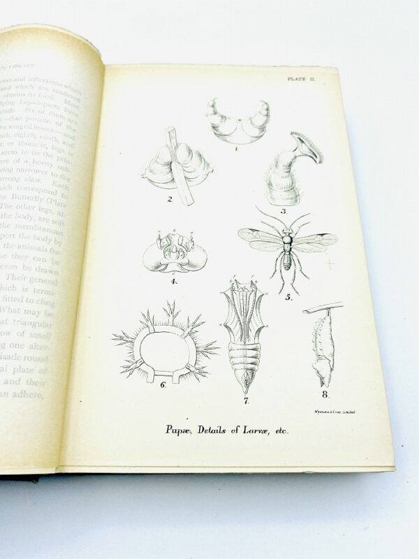 W. F. Kirby, F.L.S. - A Hand-Book of the Order Lepidoptera - 1894/1897