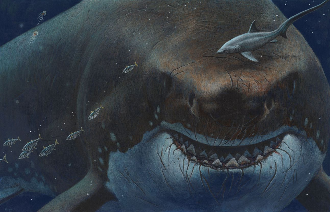 Is it possible that the Megalodon still lurks on the ocean floor?