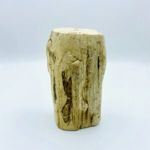Palish petrified wood from Indonesia (22 million year old)