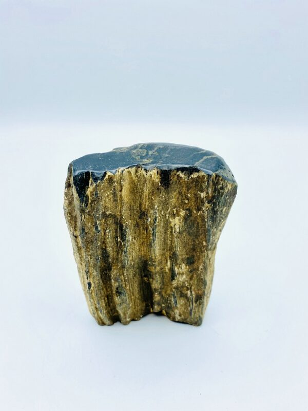 Small black petrified wood from Indonesia (22 million year old)