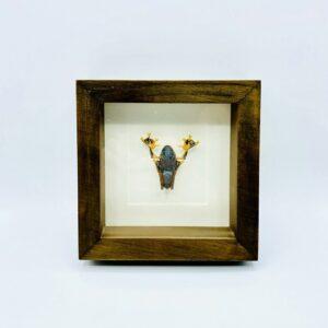 Real Green flying frog (Rhacophorus reinwardtii) in frame