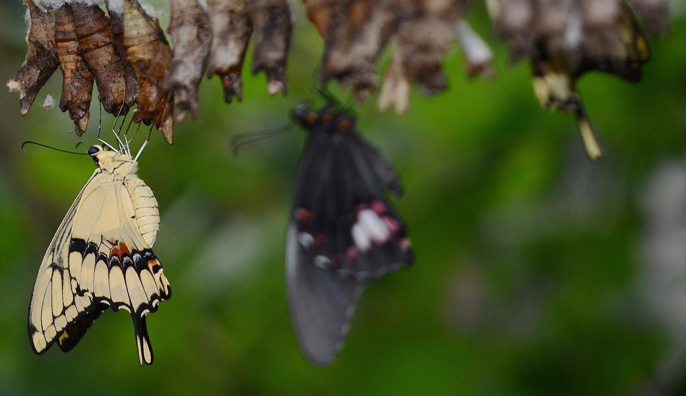 Natural History Curiosities - Supporting the Mida Butterfly Farm in Watamu, Kenya