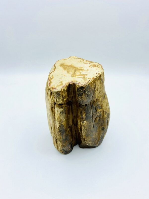 Block of petrified wood from Indonesia (22 million year old)