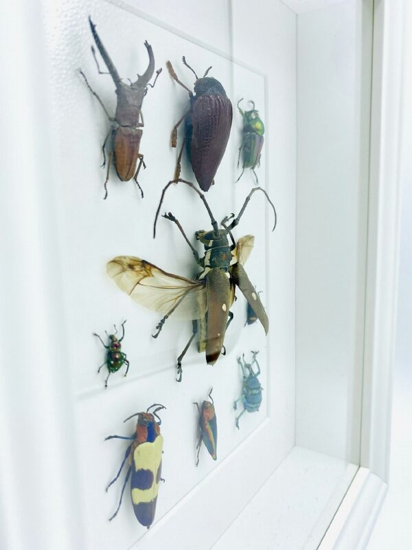 Magnificent insect mosaic frame with 9 specimen