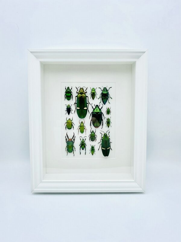 Unique green beetle mosaic frame with 15 specimen