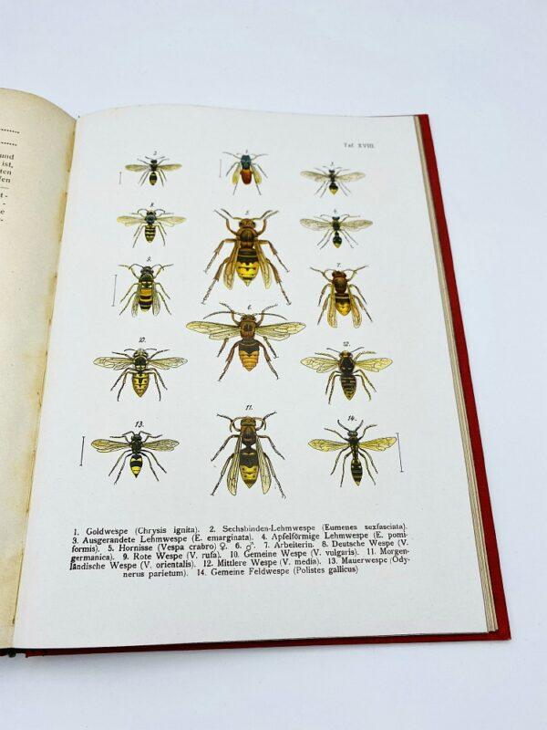 Die Insekten - Dr. R. von Hanstein (1923)