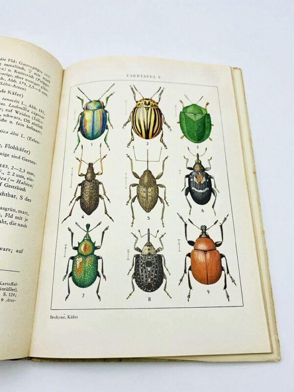 Welcher käfer ist das? - J. und B. Bechyne (1954)