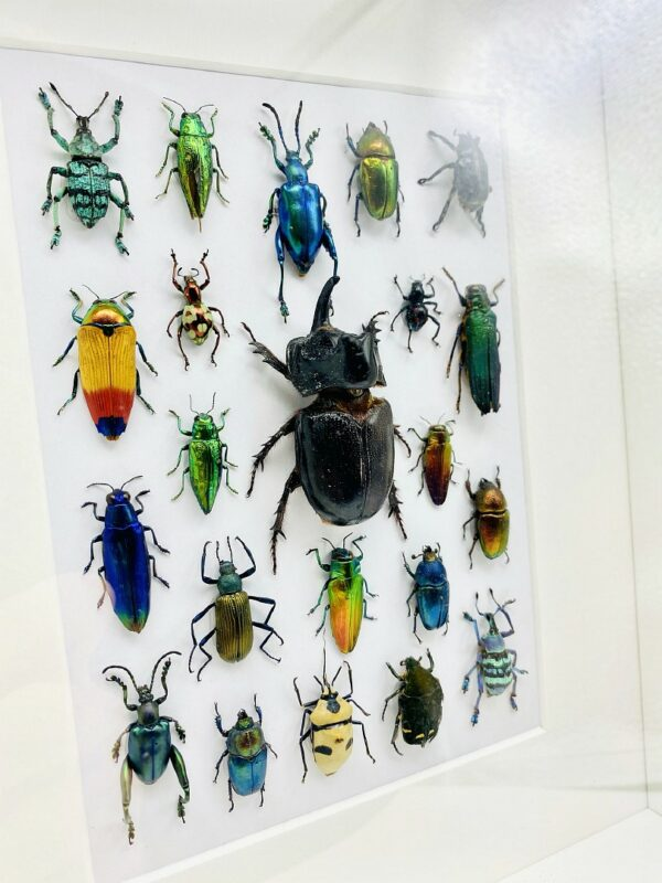 Unique insect mosaic frame with 22 specimen