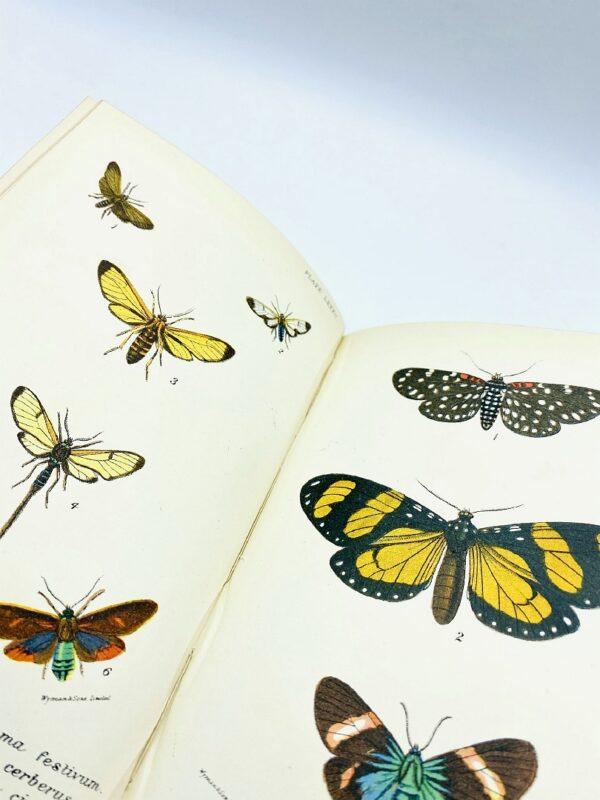Kirby - Handbook to the Order Lepidoptera - 1896/1897
